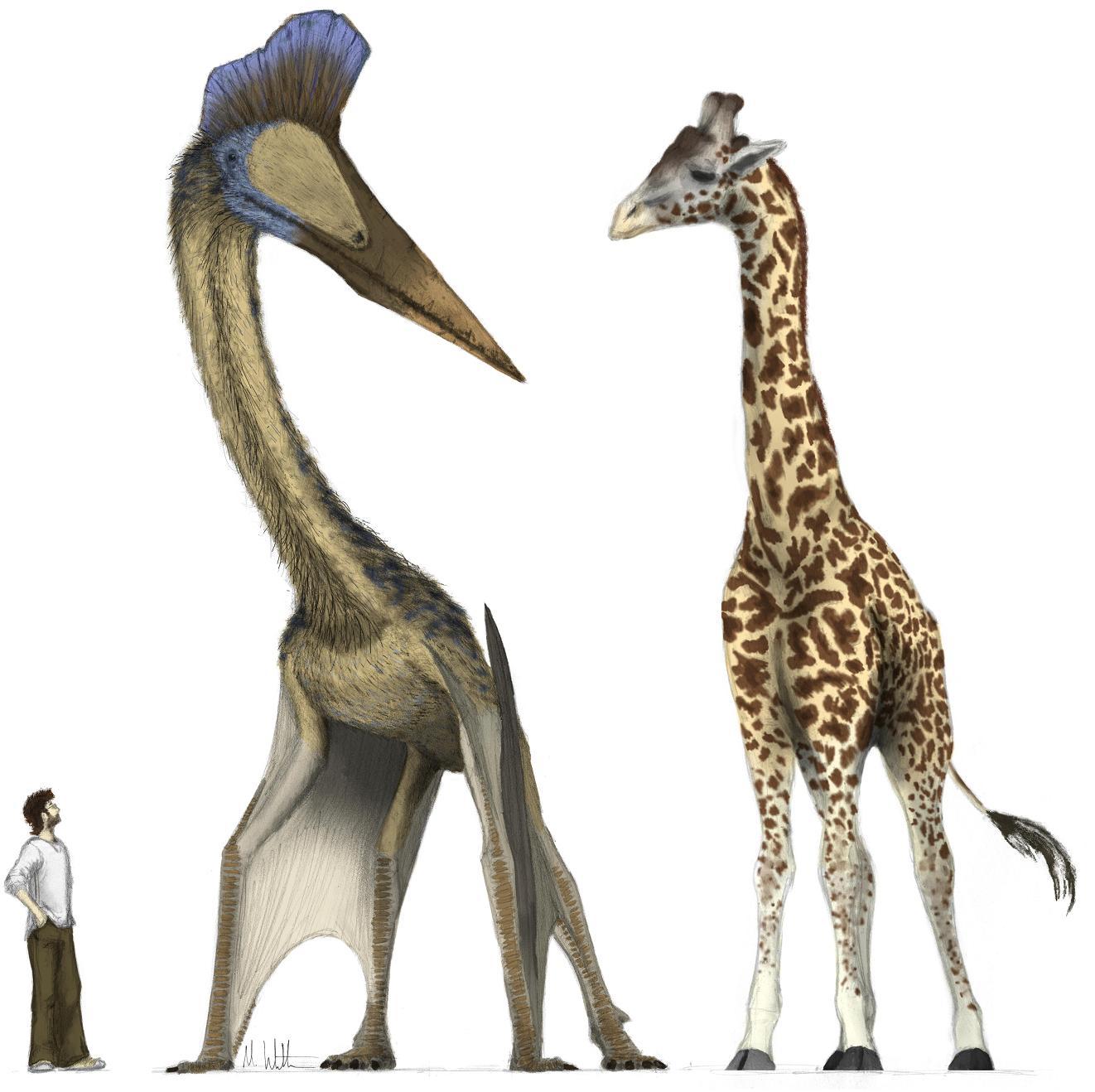 Hatzegopteryx Size Hatzegopteryx jpg