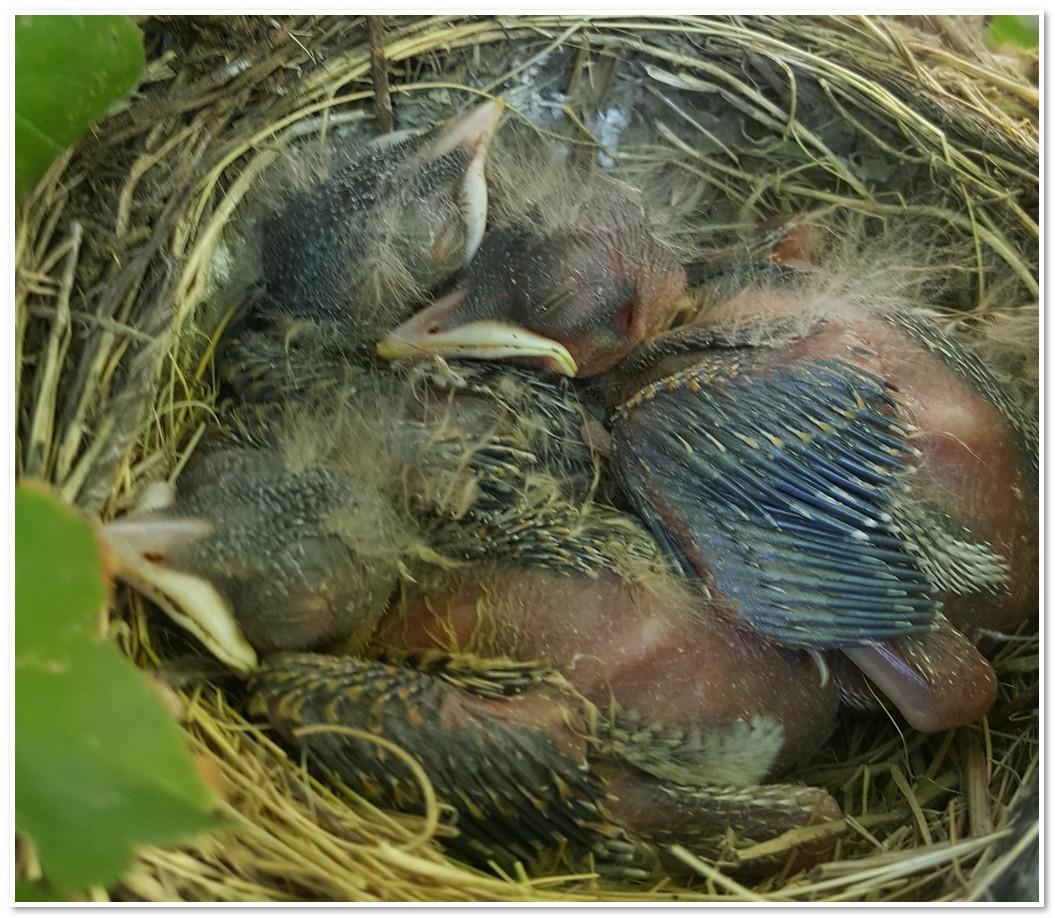 bird-20170610_171016.jpg