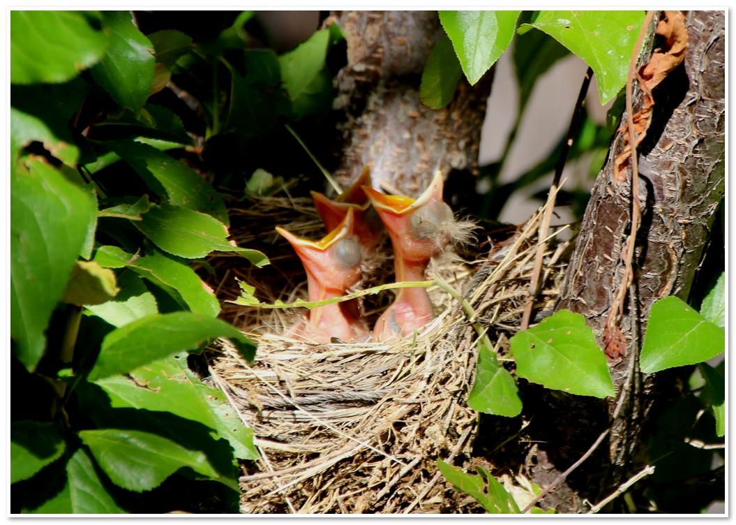 2017-06-06 bird 053.jpg