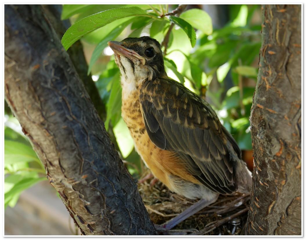 bird-2017-06-17.jpg